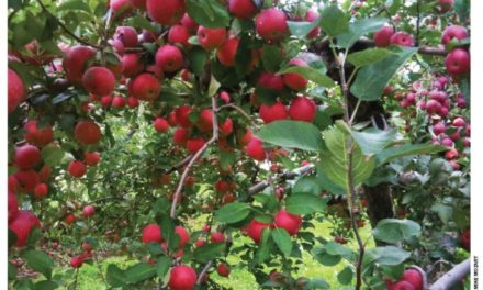 Of Apples and Obsessions