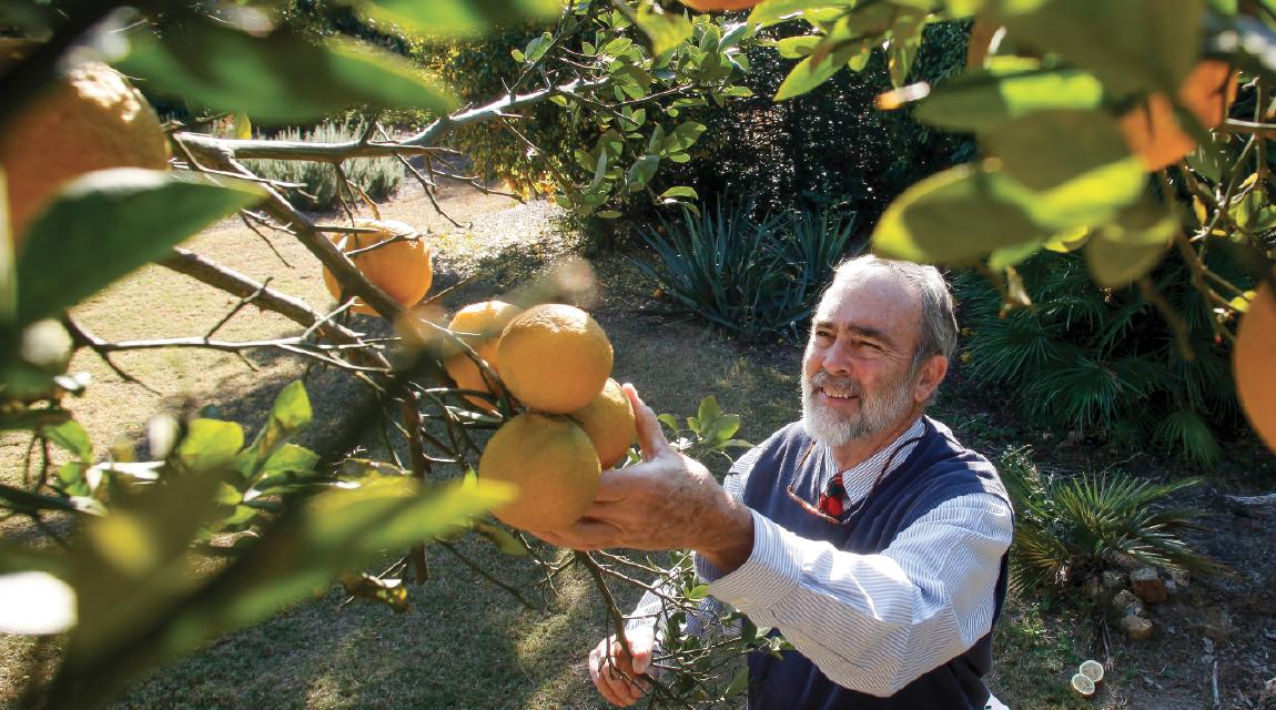 joe Le Vert, The Citrus Man
